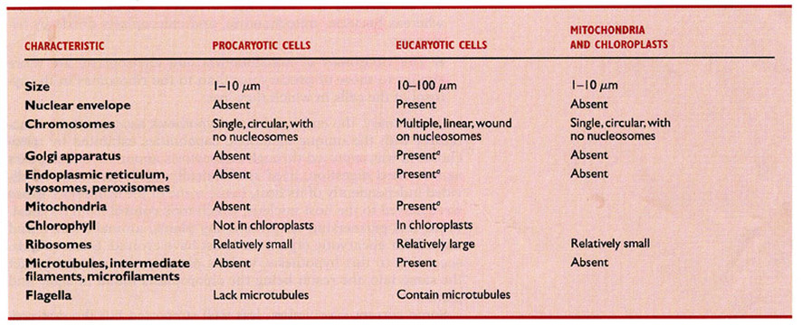 Eukaryotic Prokaryotic Cell Anatomy Mr Longs Science Webpage – Prokaryotic and Eukaryotic Cells Worksheet